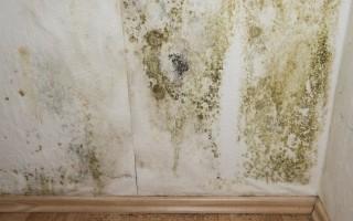 Taches de moisissures sur un mur