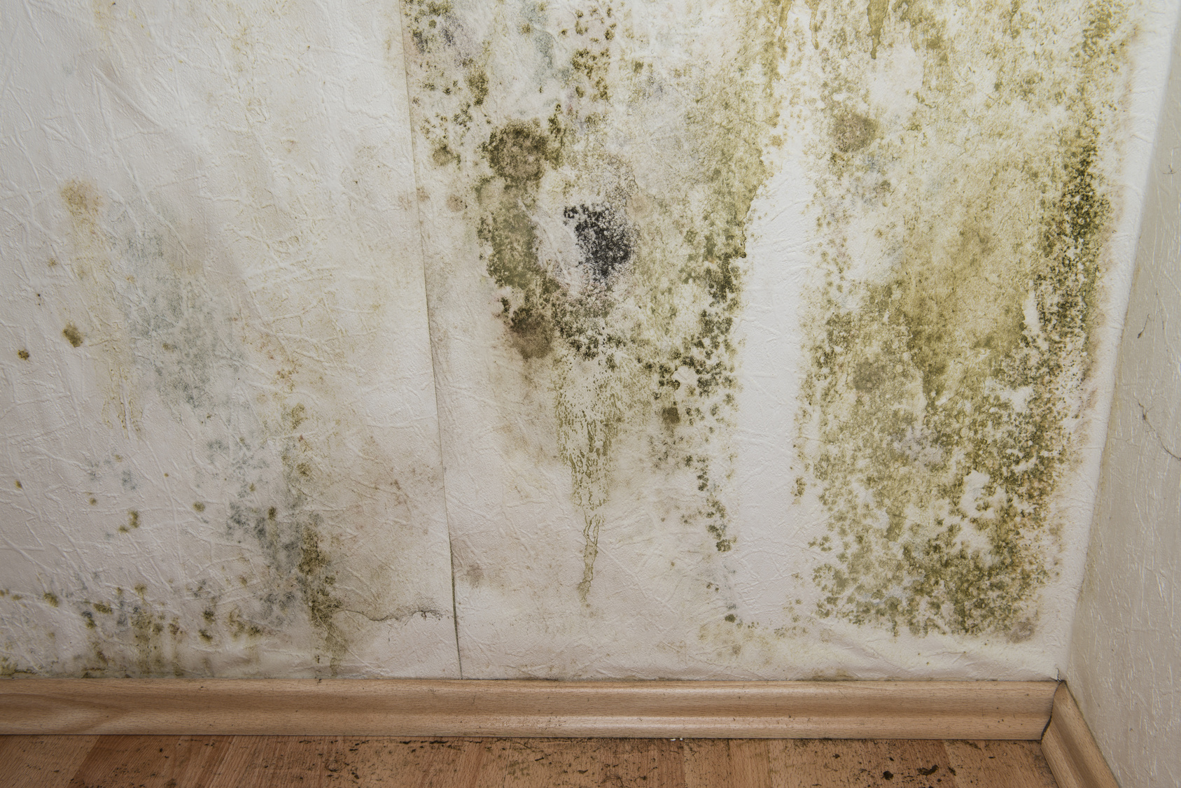 Peinture anti moisissure son prix comment la choisir et for Peindre un mur en blanc